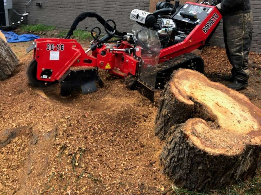 Get stump grinding services in Fort Worth, TX